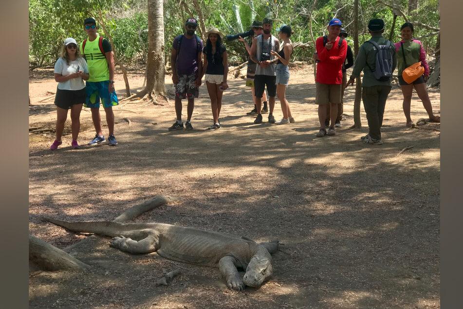 Touristen betrachten aus gebührender Entfernung einen Komodowaran.