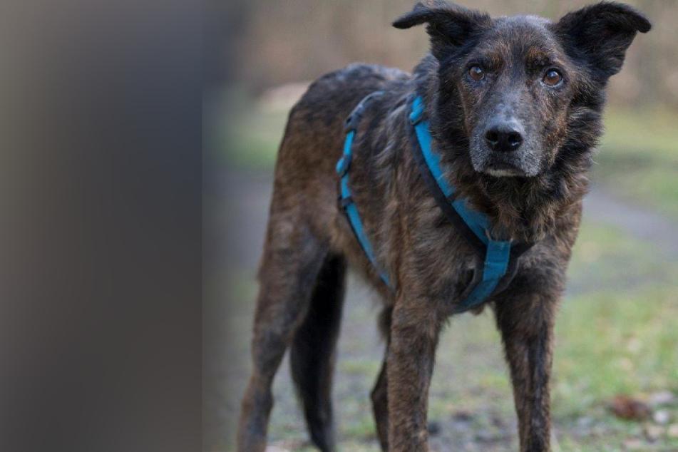 Blinder Hund kann endlich wieder sehen: Doch die Geschichte endet dennoch tragisch