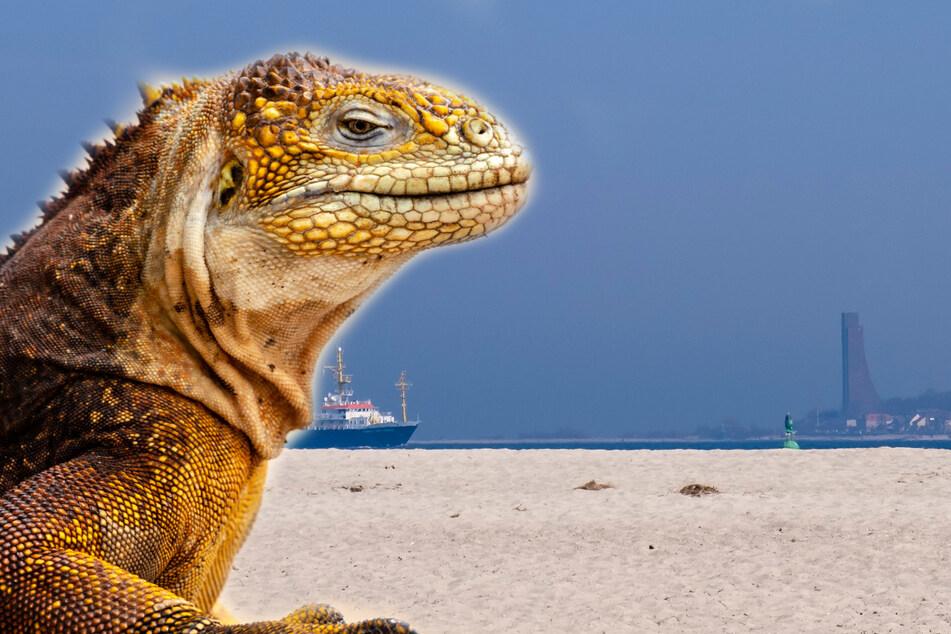 Riesiger Leguan an deutschem Strand entdeckt! Polizei muss einschreiten
