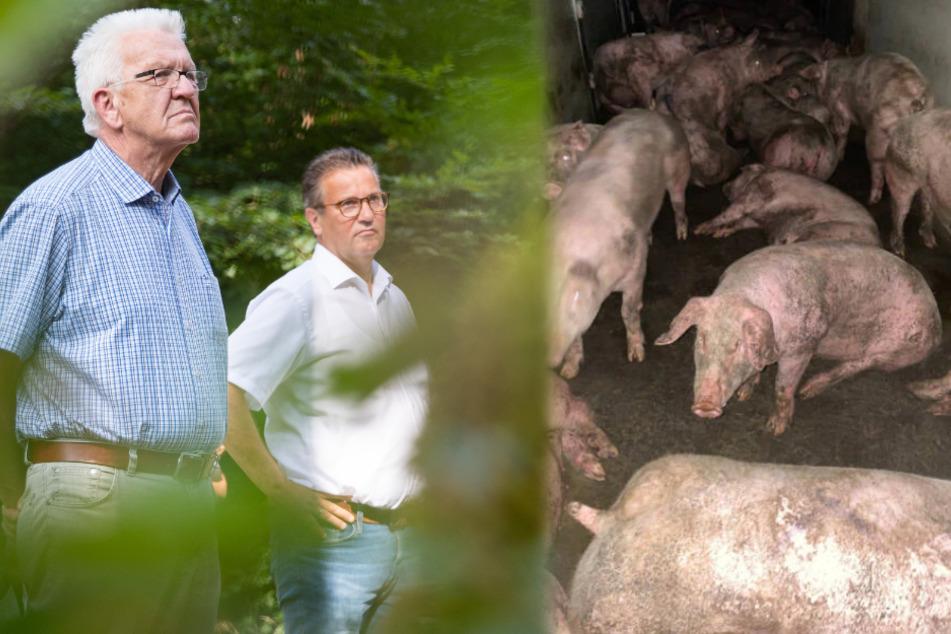 Trotz Schlachthof-Skandalen: Kretschmann steht zu seinem Agrarminister