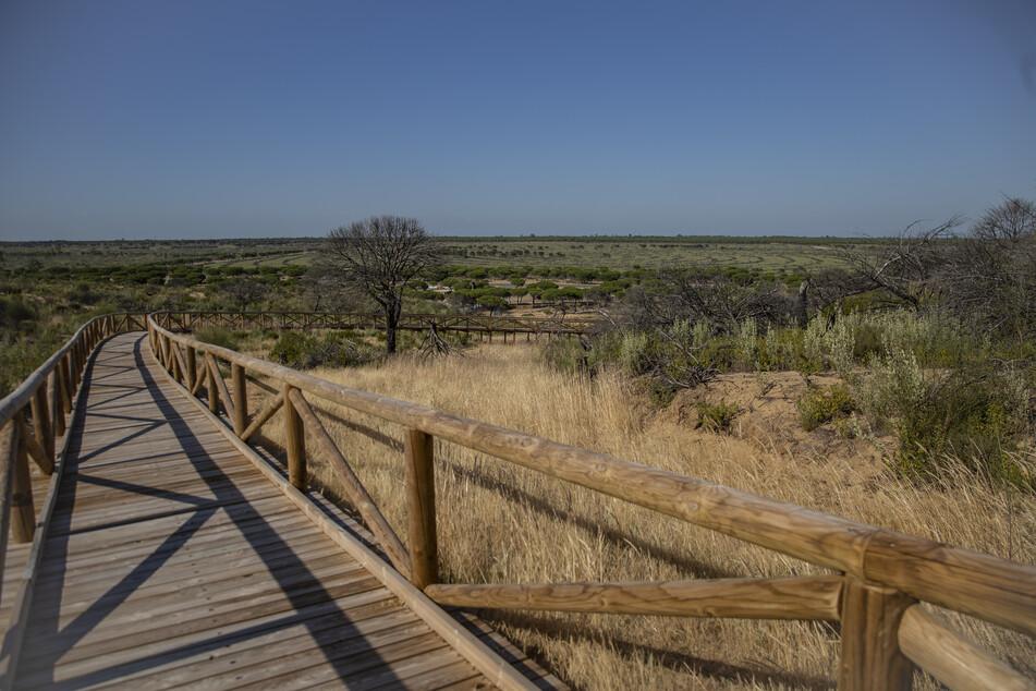 Blick auf den Naturpark von Doñana. Beim Schutz des wegen des Tourismus und der intensiven Landwirtschaft von Austrocknung bedrohten Naturparadieses Coto de Doñana muss sich Spanien in Zukunft viel mehr anstrengen.