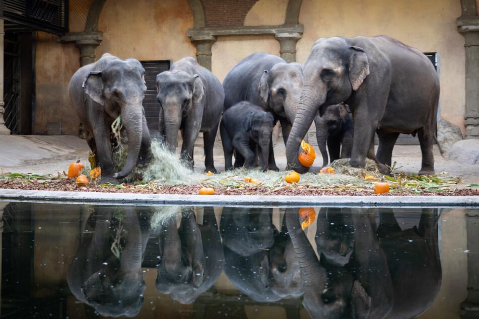 Tierpark Hagenbeck: Existenz durch Corona-Schließung in Gefahr?
