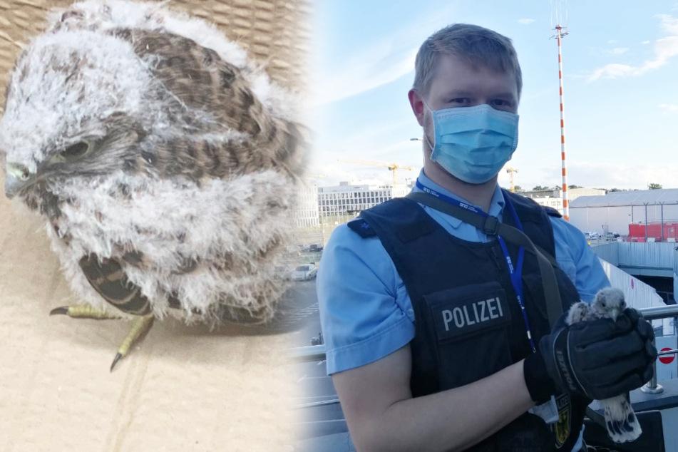 Polizist rettet hilflosen Turmfalken