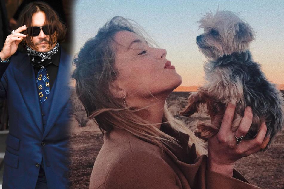 Johnny Depp soll Hund seiner Ex-Frau in die Mikrowelle gesteckt haben