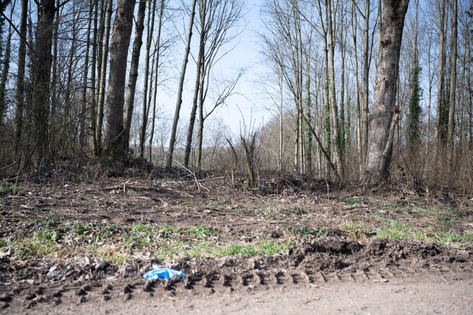 Das Waldstück, in dem es zur Bluttat kam.
