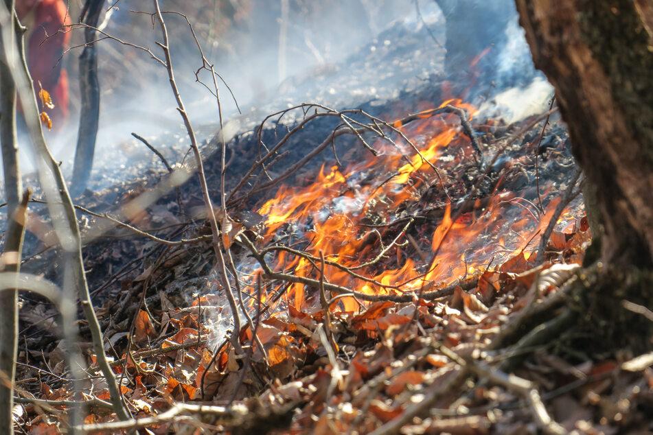 """Vergangene Woche brannte es in einem Waldstück bei Aue. Die Waldbrandgefahr im Erzgebirge ist laut dem Sachsenforst als """"mittlere Gefahr"""" einzustufen."""