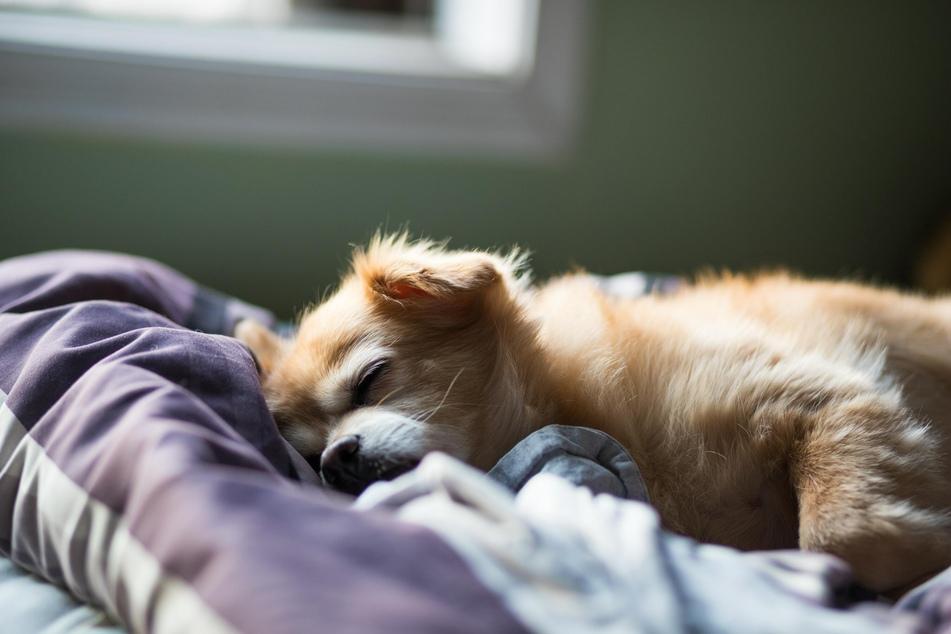 Schlafende Hunde soll man nicht wecken - das gilt besonders für Kinder!