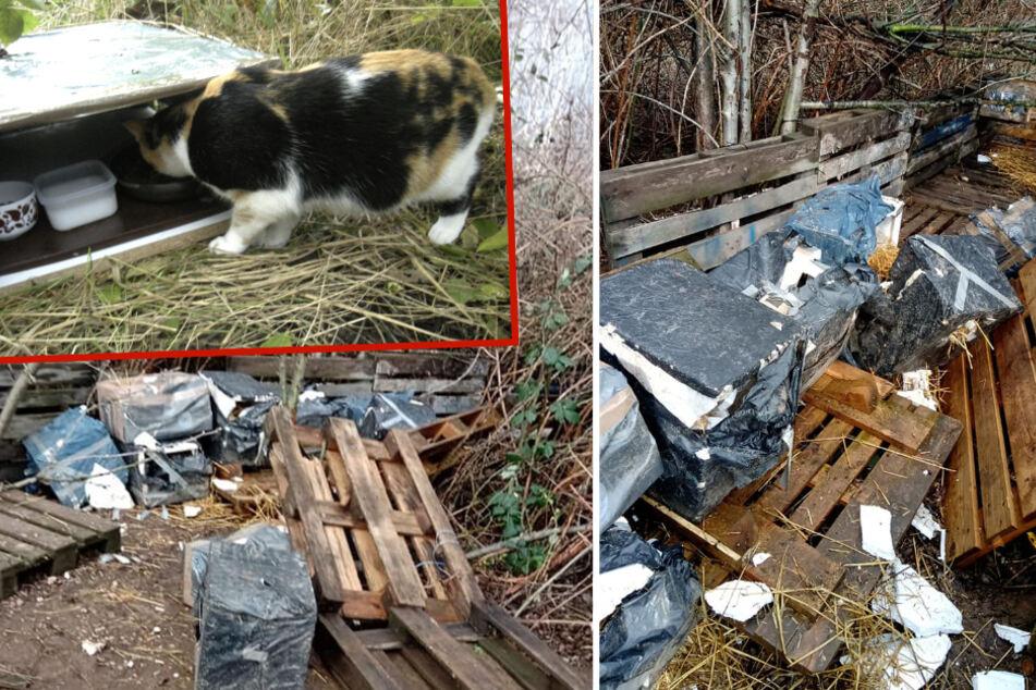 Sachsen: Vandalen zerstören Futterstellen für Katzen