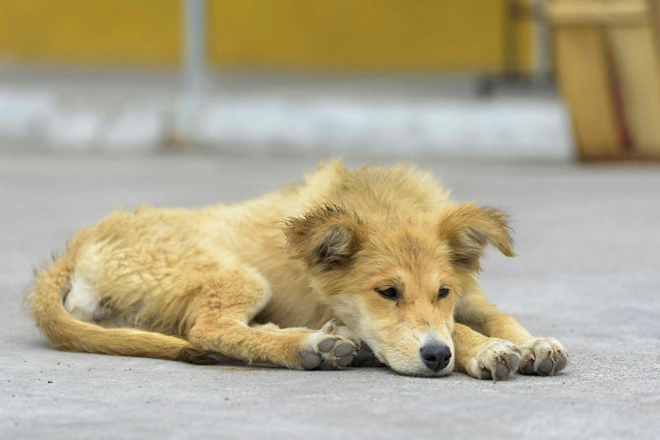 """Wer ein Tier """"adoptiert"""", sollte sich nicht nur von dessen """"Niedlichkeit"""" leiten lassen."""