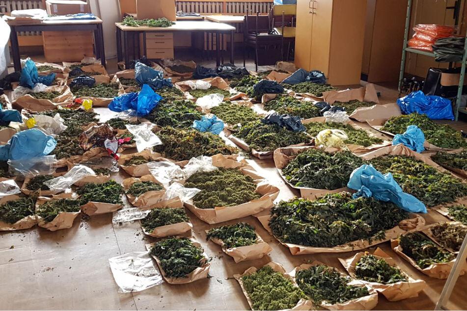 Außerdem entdeckten die Beamten auch noch mehr als 50 Kilogramm Cannabiskraut.