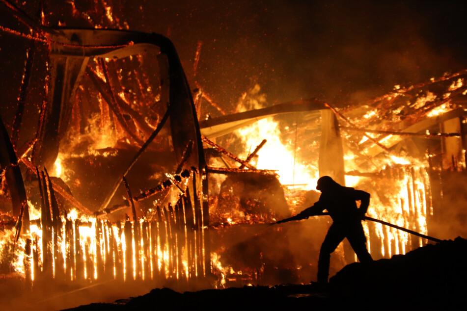 Flammen-Inferno auf Bauernhof: Zahlreiche Tiere tot und Millionenschaden