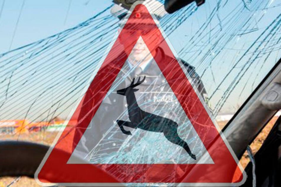 Jetzt im Frühjahr: Diese Regeln sollten Autofahrer bei Wildwechsel befolgen