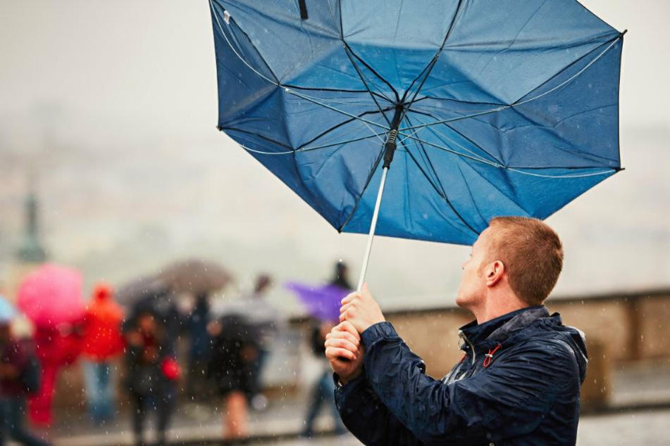Ab Freitagnachmittag wird es stürmisch in Sachsen.