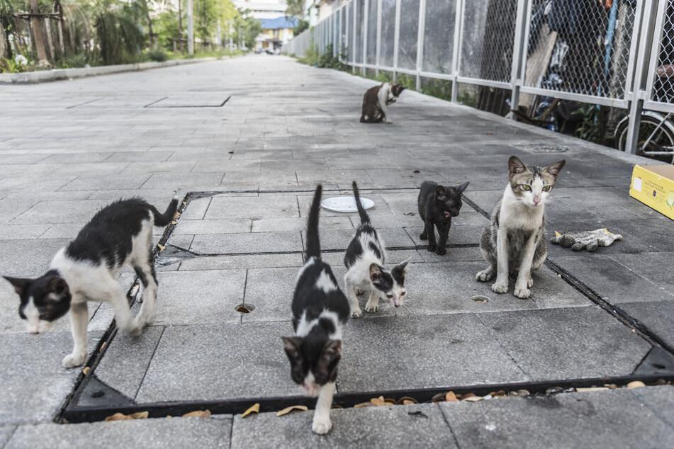 Neben Hunden leiden besonders Katzen unter der aktuellen Situation.