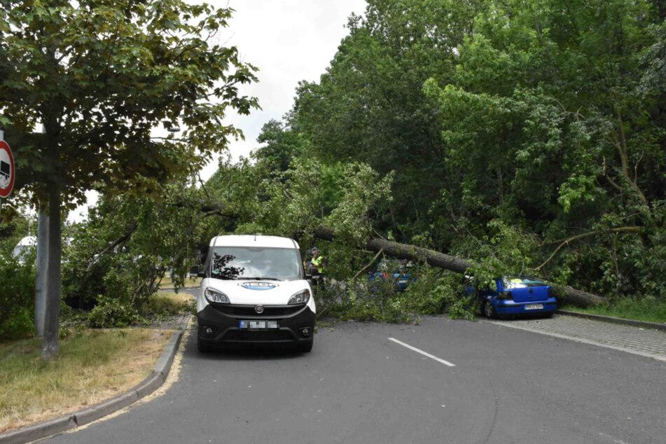 Der Baum erwischte drei verschiedene Fahrzeuge.