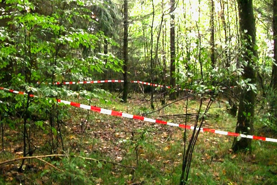 Ein Pilzsucher hatte in diesem Waldstück die sterblichen Überreste der vermissten Maria Bauer gefunden. (Archivbild 2013)