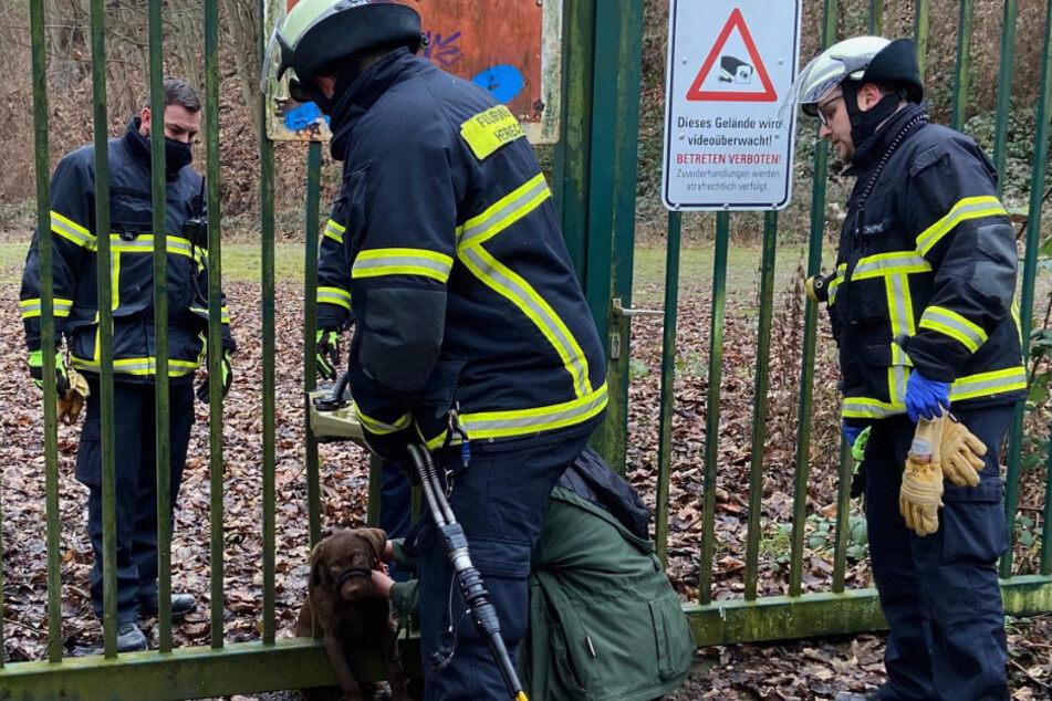 Der Hund überstand alles unverletzt. Auch das Metalltor wurde nicht beschädigt.