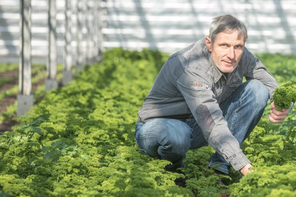 Nach Marktverbot: Gartenbauer Naumann bringt sein Gemüse zu Euch nach Hause