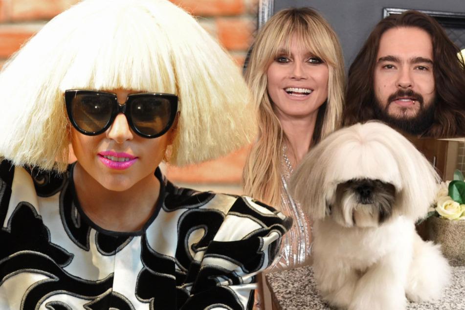 Lady Gaga, Heidi Klum, Gandalf: Dieser Hund sieht aus wie so mancher Star