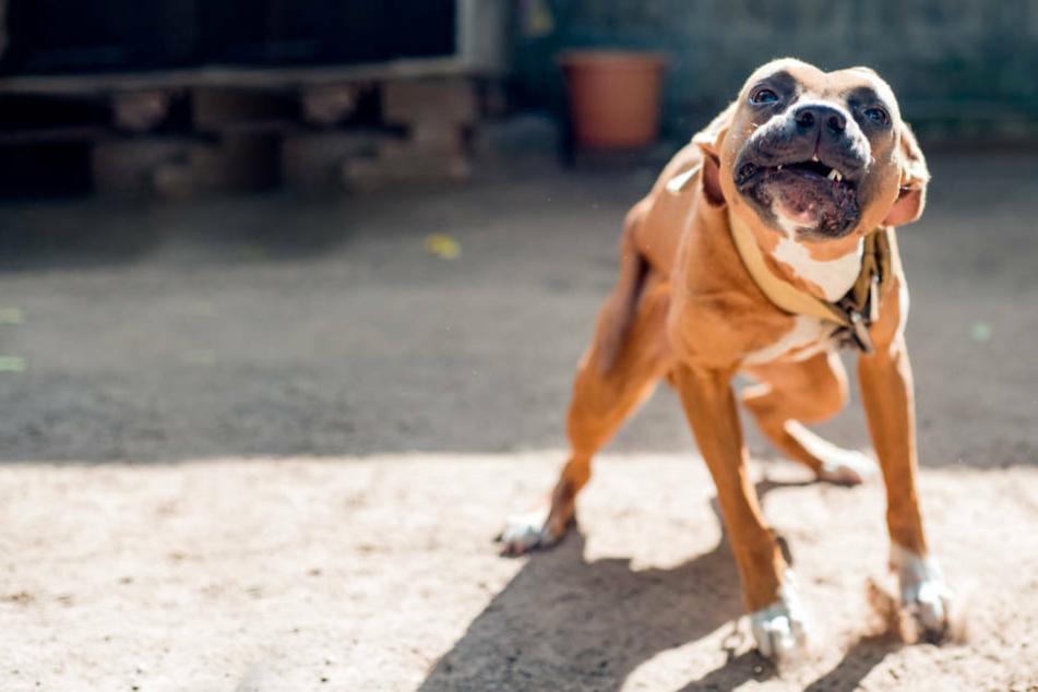 Radfahrerin von Hund angesprungen und von Hundehalter attackiert