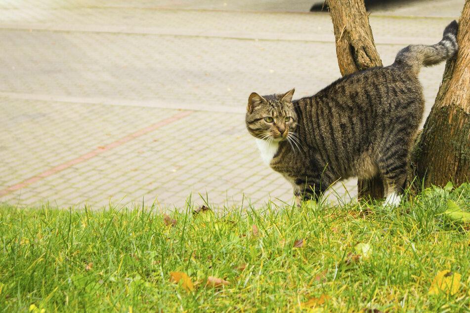 Besitzerin ist verblüfft, als sie sieht, was ihre Katze nach Hause bringt