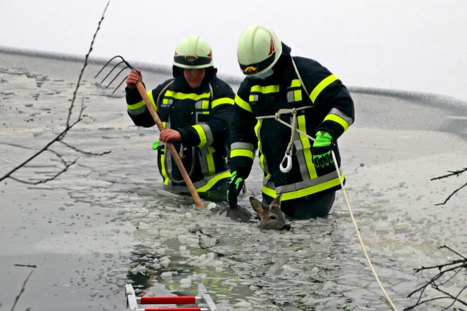 Zwei Feuerwehrleute holen ein junges Reh aus dem Wasser eines Weihers in der Oberpfalz.
