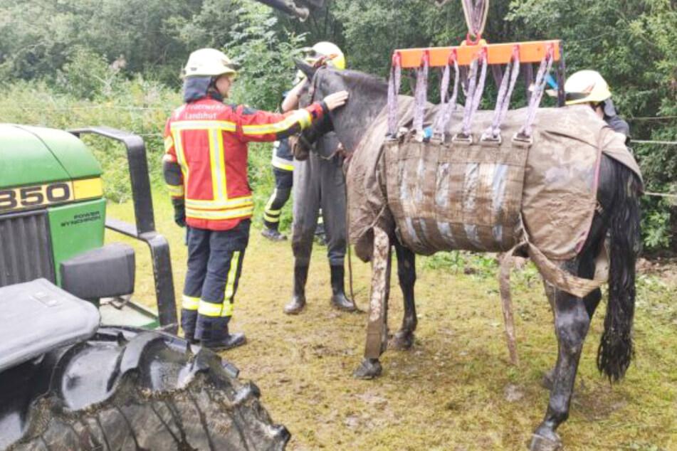 Dramatische Rettungsaktion: Feuerwehr zieht hilfloses Pferd aus Schlamm