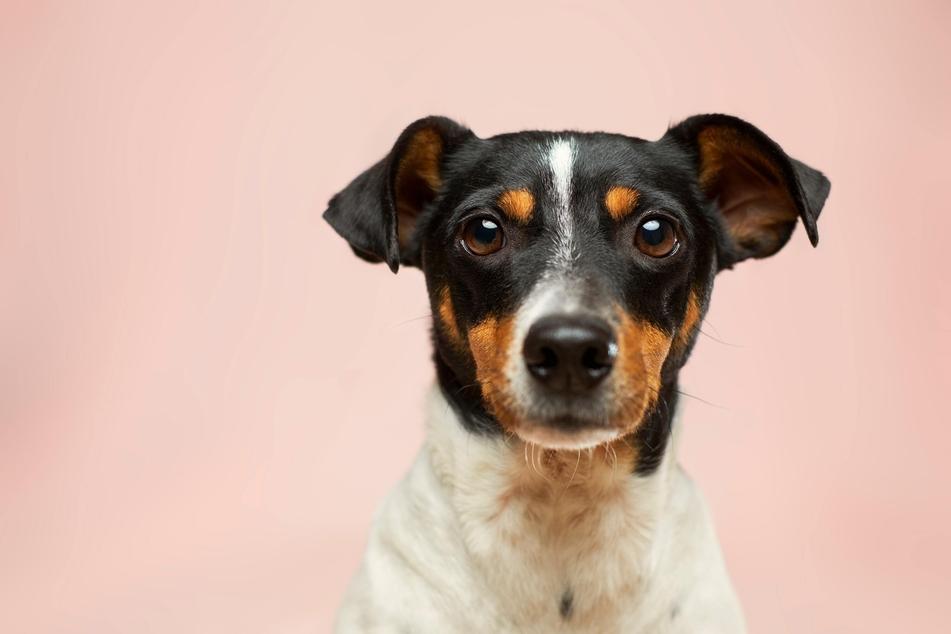 Die neuesten Ratgeber und Infos rund um Hunde bei TAG24. (Foto: Unsplash/Victor Grabarczyk)