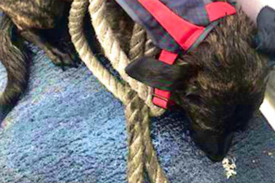 Hund läuft Besitzern davon: Als sie erfahren, wo er wieder auftauchte, trifft sie der Schlag!