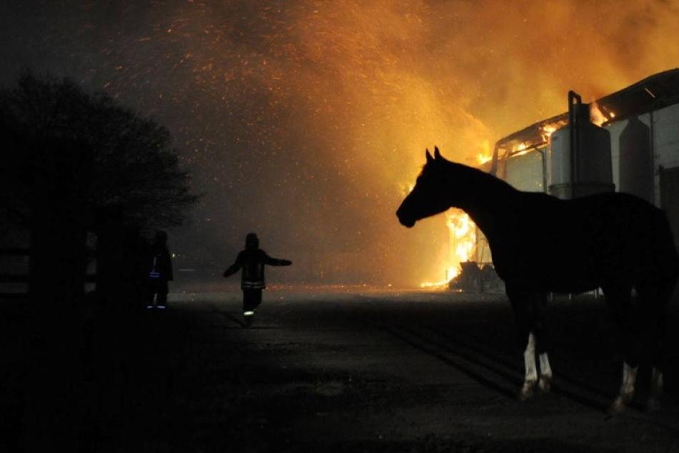 Gutshof mit 20 Pferden komplett ausgebrannt