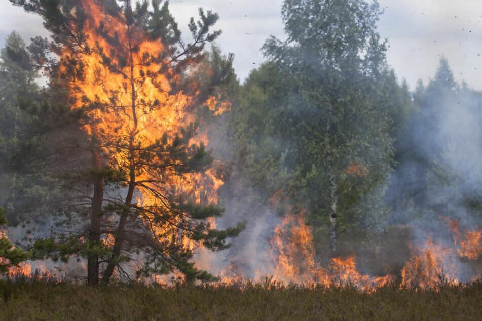 Bäume eines Waldes stehen in Flammen.