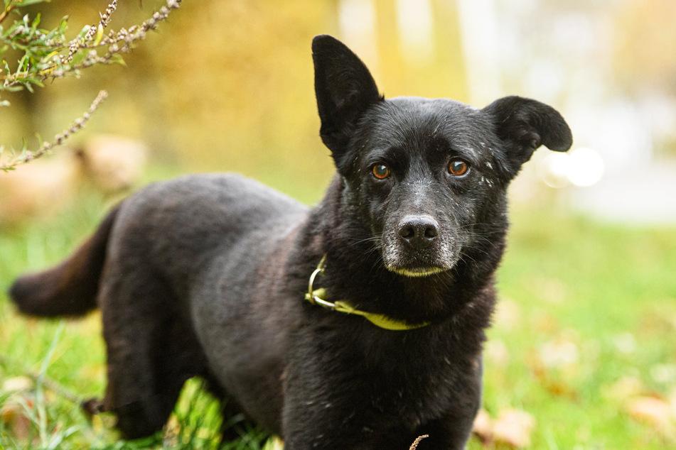Hund Gary lief in fünf Tagen 25 Kilometer weiter, ehe er erschöpft in einem Wald gefunden wurde.