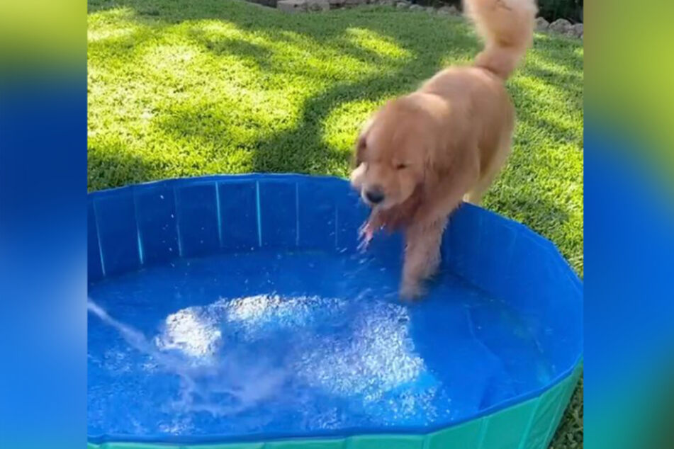 Golden Retriever Cooper ist ganz und gar nicht wasserscheu.
