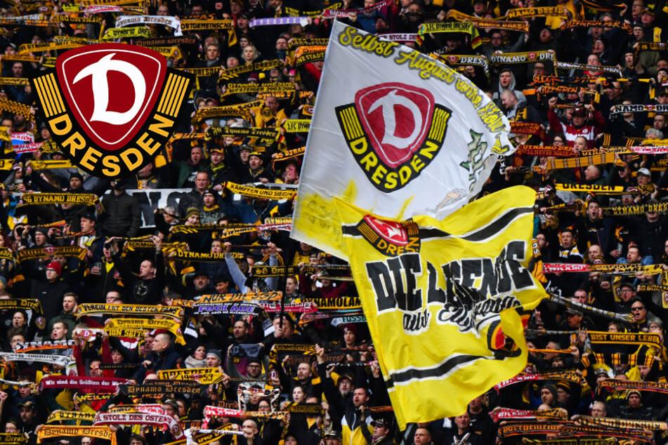 Dynamo mit starker Mitglieder-Entwicklung! SGD unter den deutschen Top 25