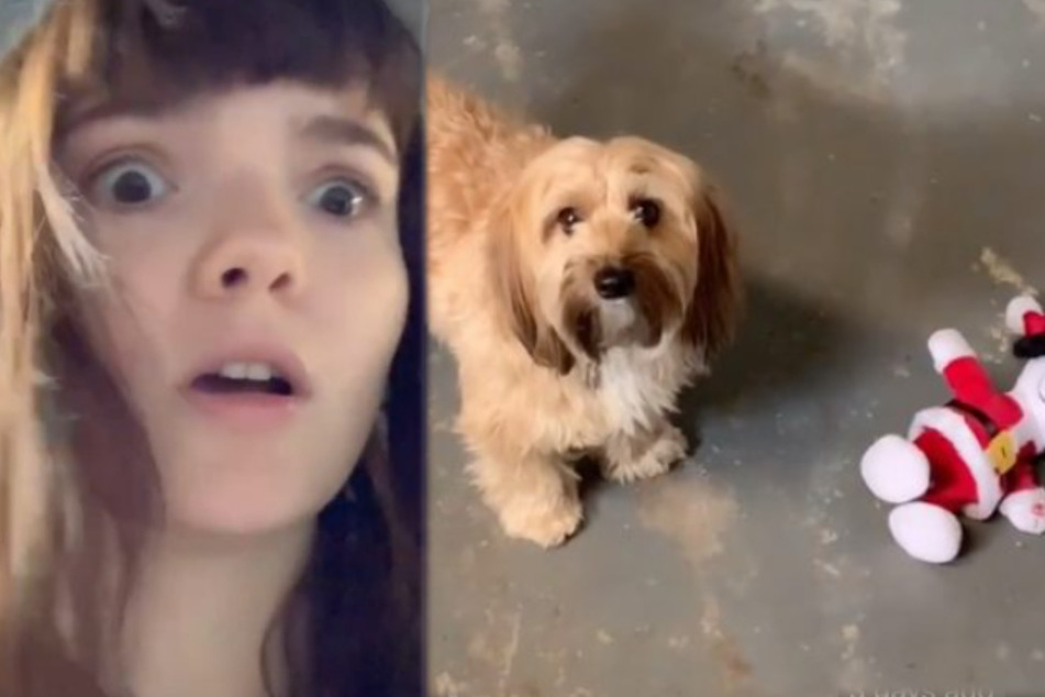 Paranormal pup: is this TikTok user's dog playing with ghosts?