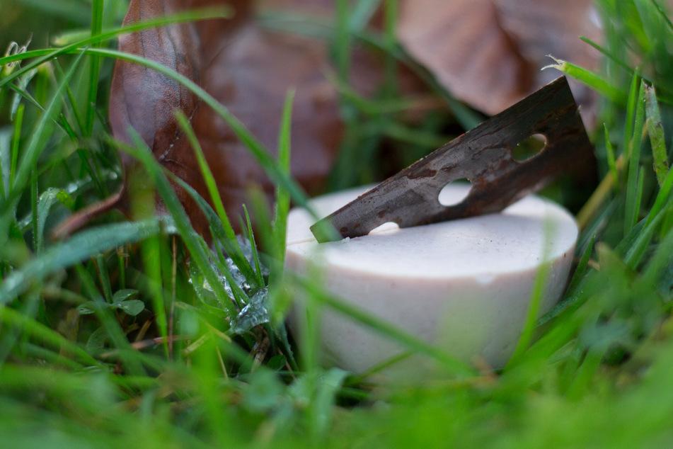 Köder mit Nadeln und Rasierklingen gespickt: Dackel muss notoperiert werden