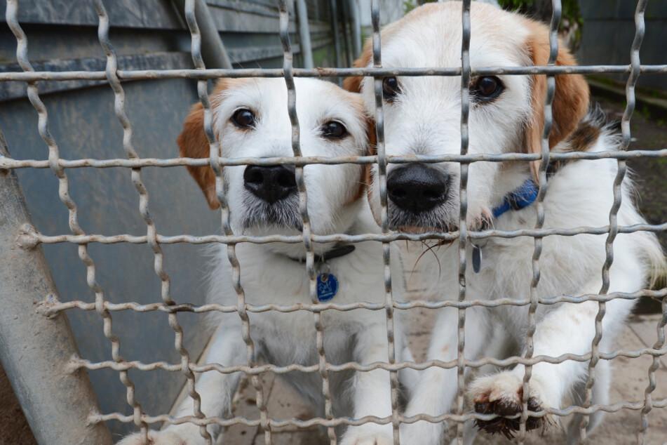 Hunde warten in einem Tierheim in Stuttgart auf ein Zuhause. (Archivbild)