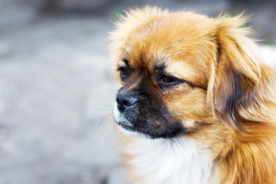 Hund getreten und gegen Geländer geschmissen: Polizei reagiert sofort