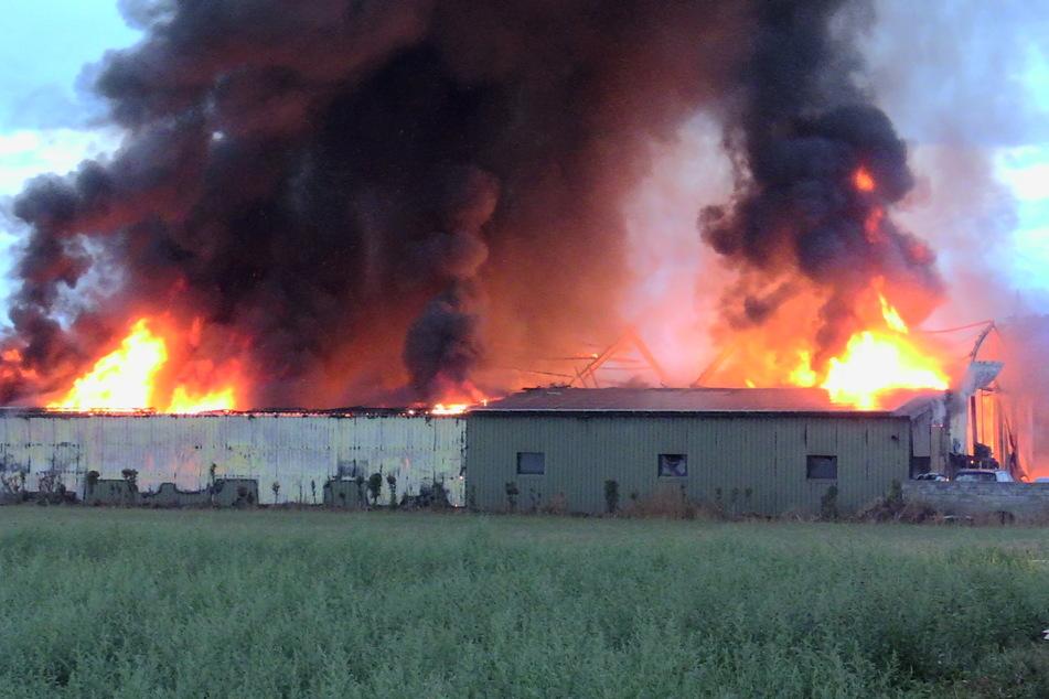 Riesige Rauchwolke und Flammen: Lagerhalle fängt Feuer