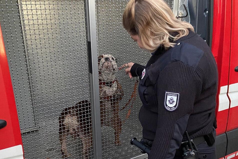 Die Tiere wurden ins Tierheim gebracht.