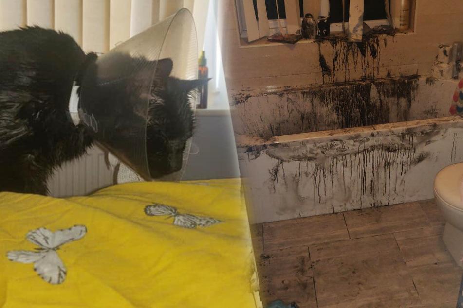 Katze kommt nachts heim: Besitzer schockiert, als er morgens die Wohnung sieht