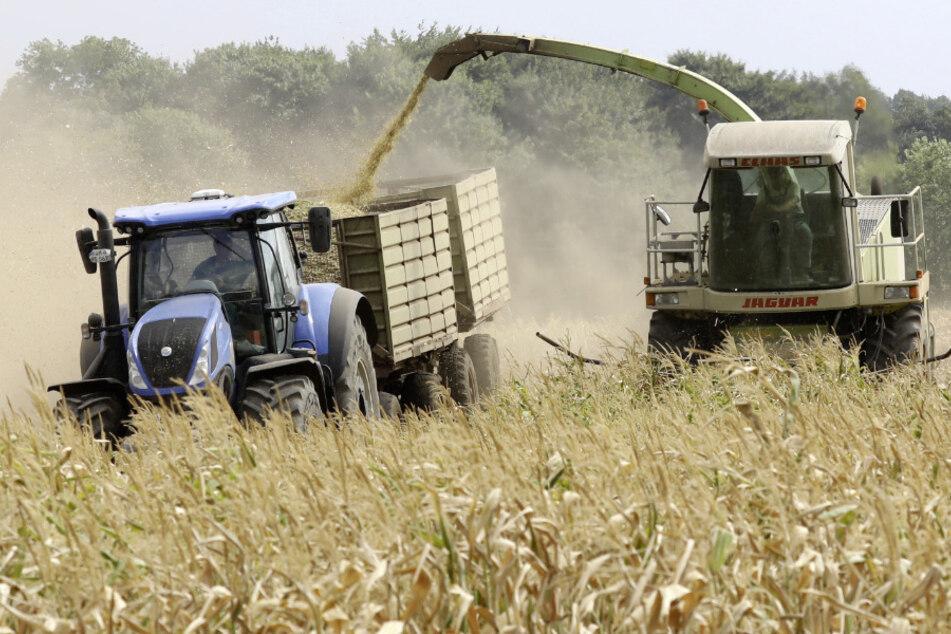 Mecklenburg-Vorpommern, Ventschow: Bauern bei der Arbeit. (Archivbild)