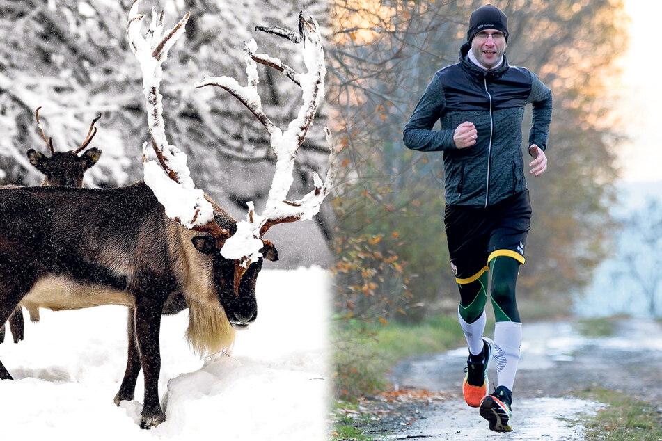 Mehr als 300 Kilometer: Spendenläufer ist für den Wildpark gerannt