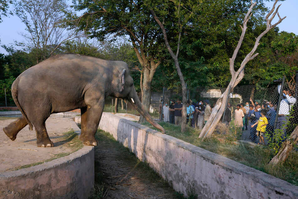 """Besucher des Marghazar-Zoo stehen vor dem Gehege des Elefanten """"Kaavan""""."""