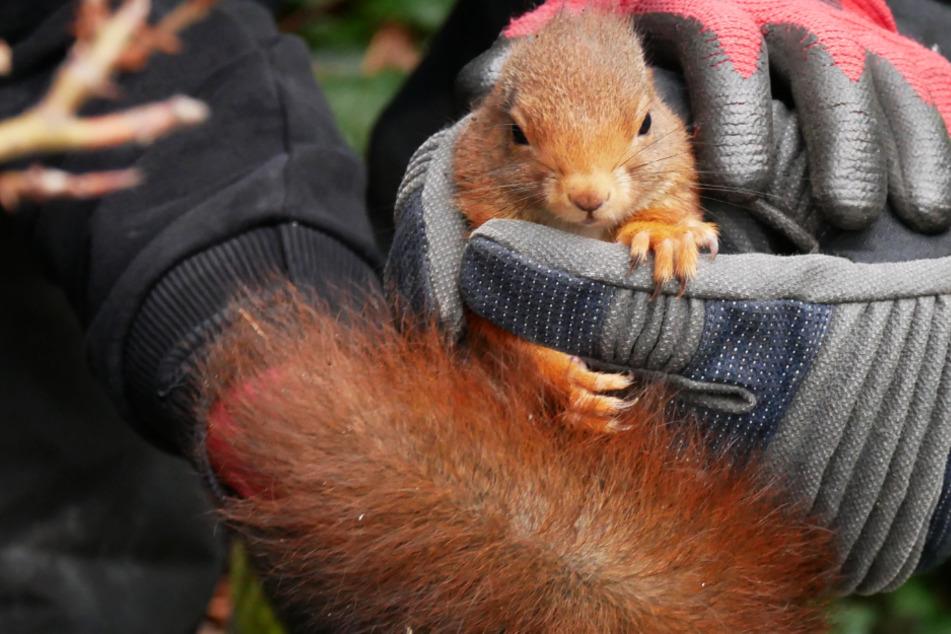 Wie süß! Feuerwehr rettet hilfloses Eichhörnchen aus Zaunpfosten