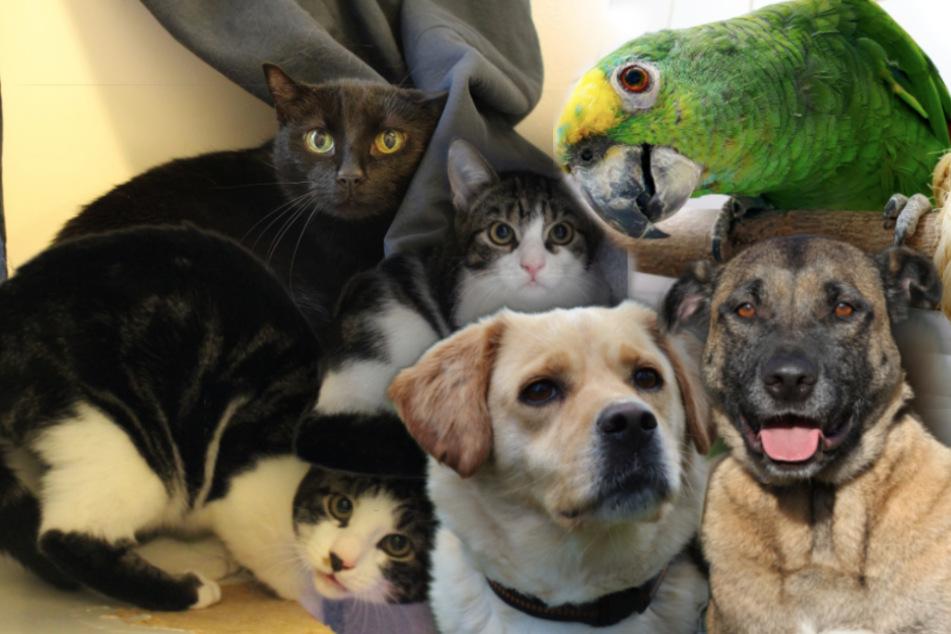 Diese sechs Tiere warten im Münchner Tierheim auf ein neues Zuhause.