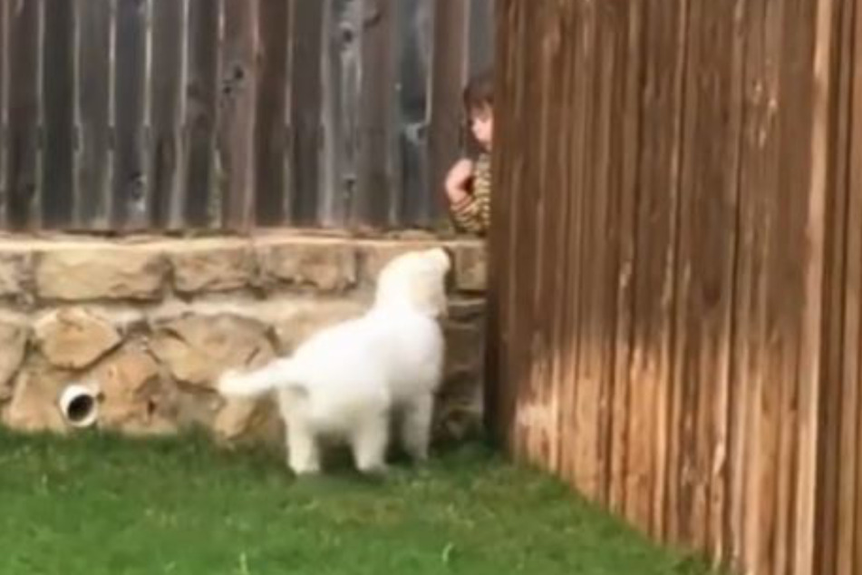 The puppy and the boy next door used to play through a gap in the backyard fence.
