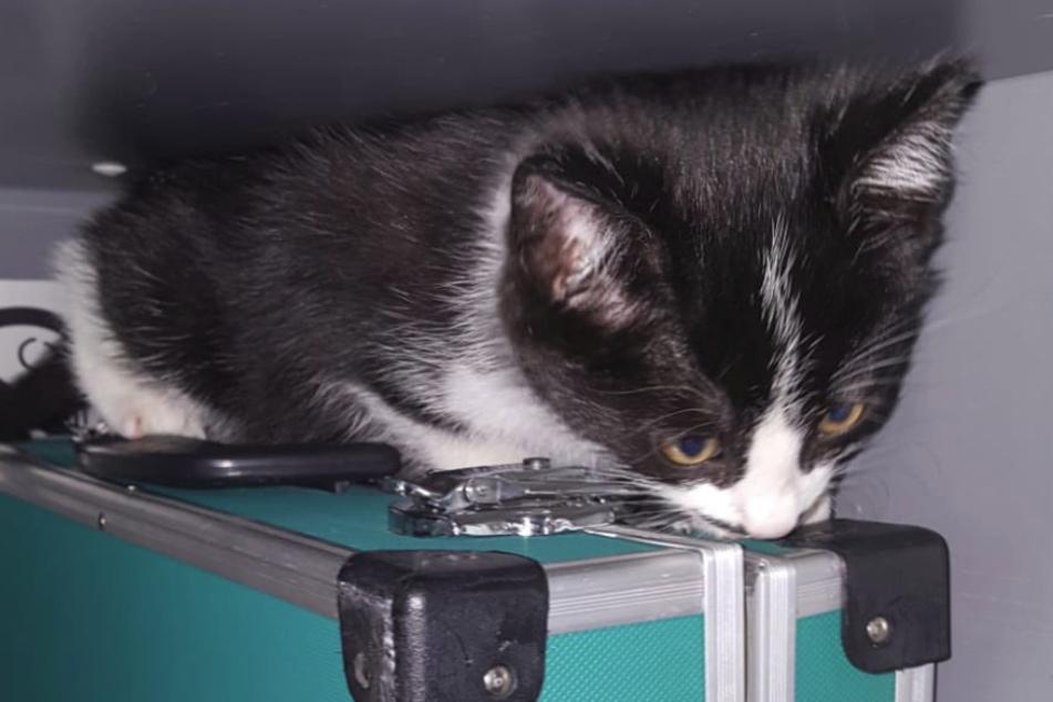 Katze Sehen