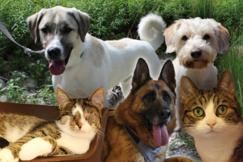 5 besondere Tiere: Diese Hunde und Katzen wünschen sich endliche ein neues Zuhause