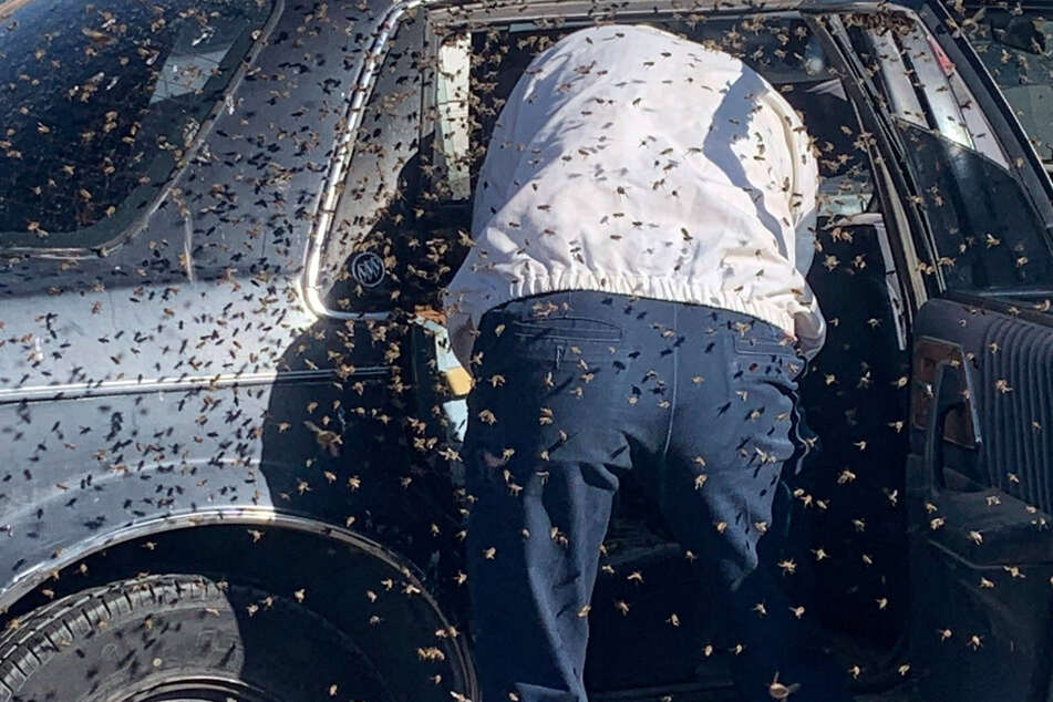 Un-bee-lievable: man returns from shopping to find his car has been turned into a hive